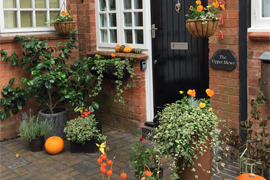 Autumn at The Upper Mews